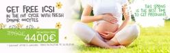 Frühlingsangebote. FREIE ICSI in IVF mit dem frischen spender oocyten zuklus
